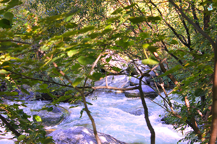 reka Vacha