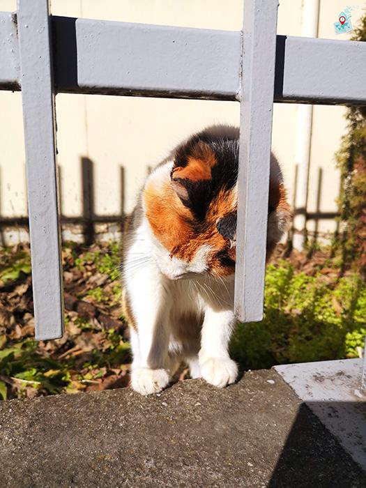 Cat, Plovdiv